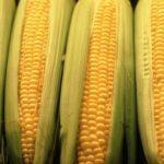 OGM, EXPO NON LI VIETI, DICA SI' ALLA SCIENZA