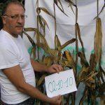 DITE LA VERITA' SUGLI OGM