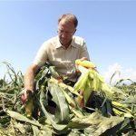 OGM, GIORGIO FIDENATO ASSOLTO: ECCO LE MOTIVAZIONI DELLA SENTENZA